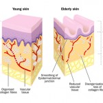 skin diagram image