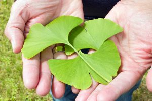 gingko for brain health