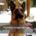 keeping your pets safe at christmas image