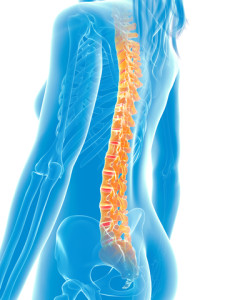http://www.dreamstime.com/stock-photos-highlighted-spine-d-rendered-medical-illustration-painful-image30727873