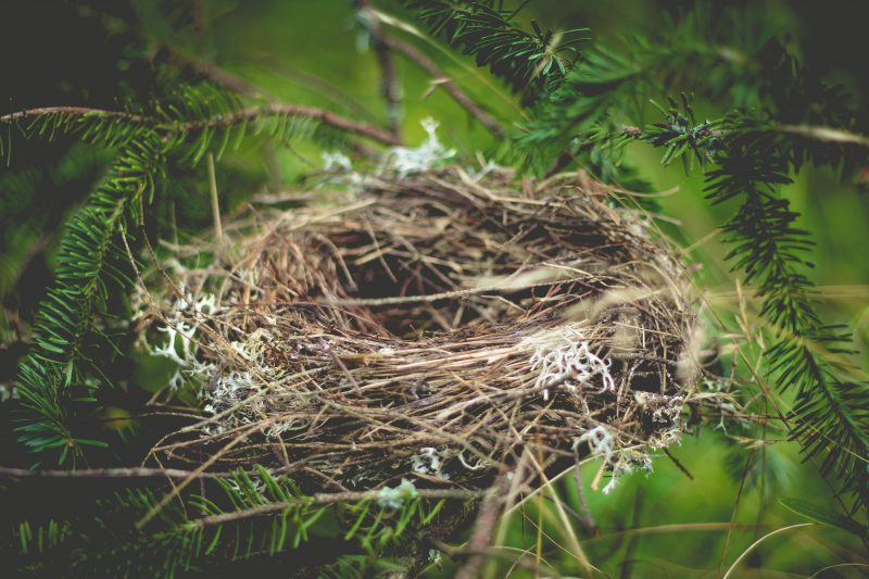 surving the emptynest image