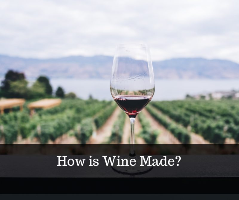 how wine is made infographic