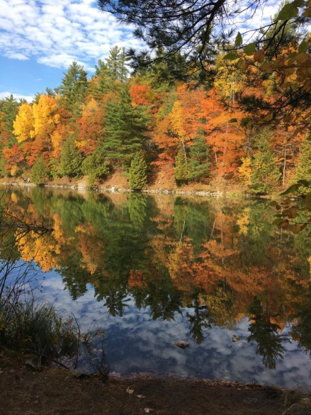 gatineau park in the fall image