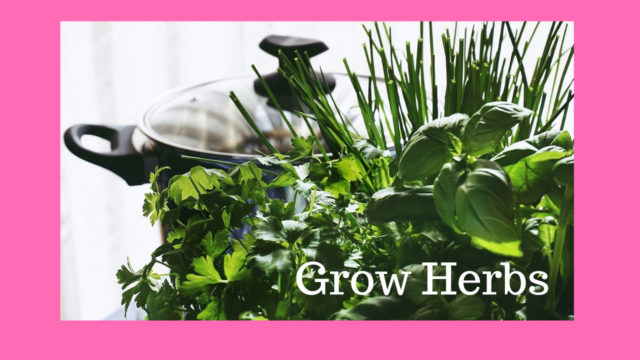 grow your own herbs i lockdown image