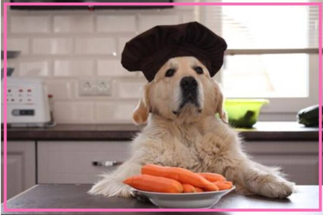 tips to create a pet friendly kitchen image